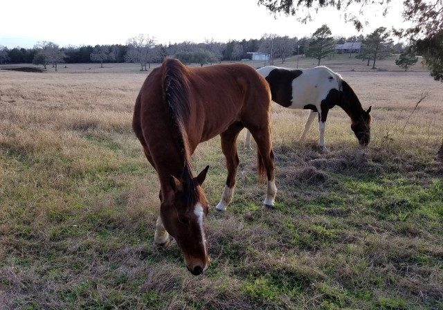 Equine Therapy image (Small)